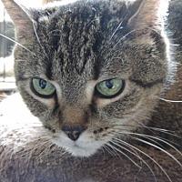 Adopt A Pet :: Yum Yum - Philadelphia, PA