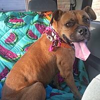 Adopt A Pet :: Anna Aasa - Austin, TX