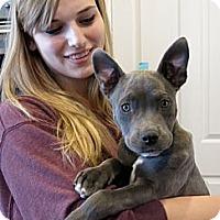 Adopt A Pet :: MICKY - Ojai, CA