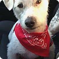 Adopt A Pet :: PERRY - Salt Lake City, UT