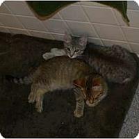 Adopt A Pet :: Emmy&Issaic*urgent! - Xenia, OH