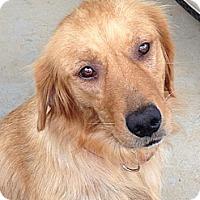 Adopt A Pet :: Isa - Foster, RI