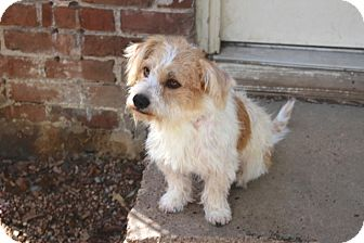 Cairn Terrier/Terrier (Unknown Type, Small) Mix Dog for adoption in Woonsocket, Rhode Island - Campbell