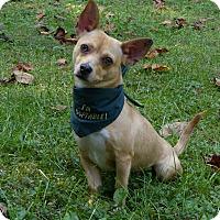 Adopt A Pet :: Jonah - Mocksville, NC