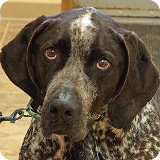 Bluetick Coonhound Mix Dog for adoption in Sprakers, New York - Elmer