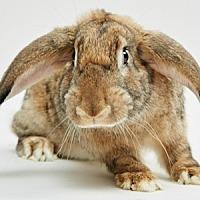 Adopt A Pet :: Bennett - Mill Valley, CA