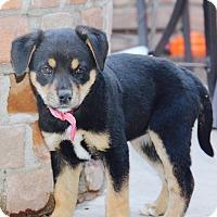 Adopt A Pet :: Kimpton - Phoenix, AZ