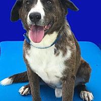Adopt A Pet :: Jared - Folsom, LA
