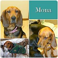 Adopt A Pet :: Mona ADOPTED - Ontario, ON