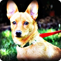 Adopt A Pet :: Jax - Tijeras, NM