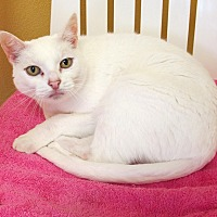 Adopt A Pet :: Pearl - Eastsound, WA
