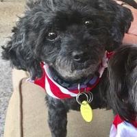 Adopt A Pet :: Licorice - Santa Fe, TX