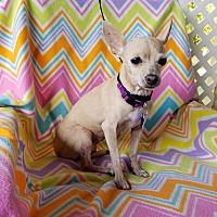 Adopt A Pet :: Leone - Hamilton, ON