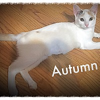 Adopt A Pet :: Autumn MKK - Washington, DC