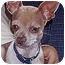 Photo 1 - Chihuahua Dog for adoption in Owatonna, Minnesota - Harley