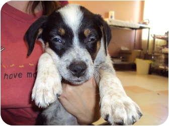 Hound (Unknown Type) Mix Puppy for adoption in Weeki Wachee, Florida - Lee