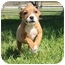 Photo 1 - Australian Shepherd Mix Puppy for adoption in Hagerstown, Maryland - Greta