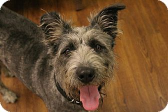 Terrier (Unknown Type, Medium) Mix Dog for adoption in Lake Odessa, Michigan - Deacon