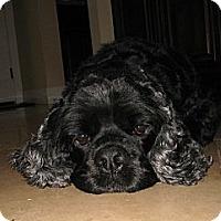 Adopt A Pet :: SHYANN - Tacoma, WA