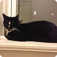 Adopt A Pet :: Bond - Chicago, IL