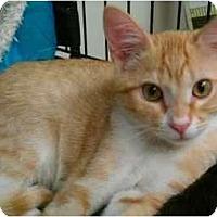 Adopt A Pet :: Puff #6 - Lunenburg, MA