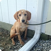 Adopt A Pet :: # 344-14 ADOPTED! - Zanesville, OH