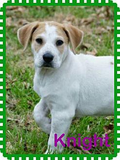 Hound (Unknown Type) Mix Puppy for adoption in McKinney, Texas - Knight