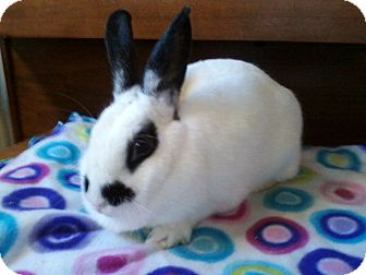 Other/Unknown Mix for adoption in Watauga, Texas - Maddie