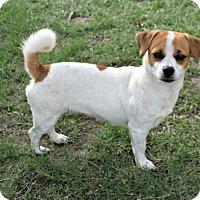 Adopt A Pet :: Dixie - Lufkin, TX