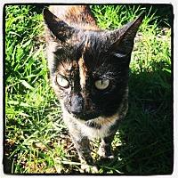 Adopt A Pet :: TROUBLE! - Harbor City, CA