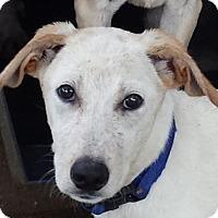 Adopt A Pet :: Miller AD 01-19-17 - Preston, CT