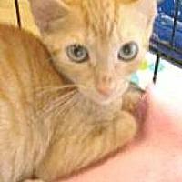 Adopt A Pet :: Danny - Miami, FL