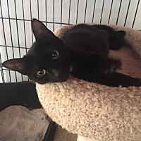 Adopt A Pet :: Madeline - Alpharetta, GA