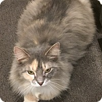 Adopt A Pet :: Myra - Salem, NH
