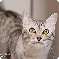 Adopt A Pet :: Theo - Fountain Hills, AZ