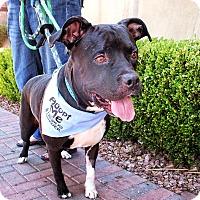 Adopt A Pet :: TUG - Las Vegas, NV