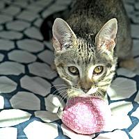 Adopt A Pet :: Minerva - Los Angeles, CA