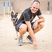 Adopt A Pet :: Zsa Zsa - Phoenix, AZ