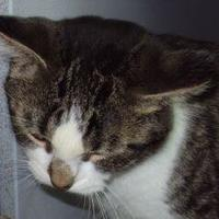 Adopt A Pet :: Pauly - Robinson, IL