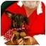 Photo 1 - Dachshund Mix Dog for adoption in Homestead, Florida - Bosco (formerly Wiggles)