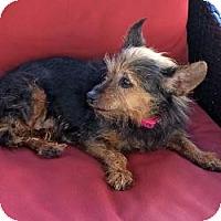 Adopt A Pet :: Charlotte - Tallahassee, FL