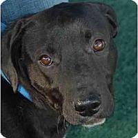 Adopt A Pet :: Dottie - Fulton, MD