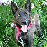Adopt A Pet :: Charlotte - Monteregie, QC