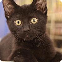 Adopt A Pet :: Mike - Sacramento, CA