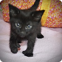 Adopt A Pet :: Jingle - Xenia, OH