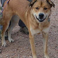 Adopt A Pet :: Sadie - Peyton, CO