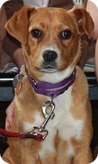 Terrier (Unknown Type, Medium)/Labrador Retriever Mix Dog for adoption in Winfield, Pennsylvania - Deana