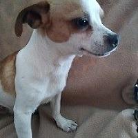 Adopt A Pet :: Brody - Mesa, AZ