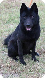German Shepherd Dog Mix Dog for adoption in Pluckemin, New Jersey - Melody