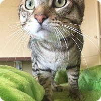 Adopt A Pet :: Silver - Chula Vista, CA